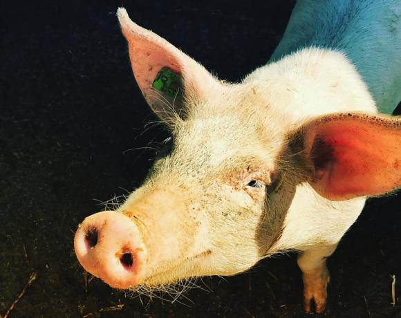 Was ist der Preis für unseren hohen Fleischkonsum?
